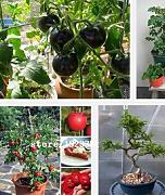 100PCS / Bag Red Banana Tomaten-Samen, ursprüngliches Paket Novel Pflanze Gemüsesamen DIY Hausgarten Easy Grow