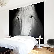 Fototapete Pferd Günstig Online Kaufen | Lionshome Fototapete Wohnzimmer Beige