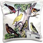 Florene Victorian - 1879 Natural History Print Of 6 Birds On A Tree - 16x16 inch Pillow Case (pc_61886_1)