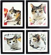 Home Living Room Decor 4 in 1 Katze Bilder 3D Wandtattoo Sticker Set Aufkleber
