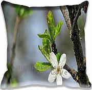 Produktbild: Pillow case/Kissenbezüge Blossom Flower Macro Unique Designs , Fashion Aero Style Pillowcase/Kissenbezüge Covers , Personalized Diy Cushion Cover for Home Office and Car