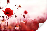 Wallprints - Wallprint W - Mohn Impressionen